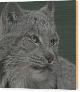 Lynx Painterly Wood Print