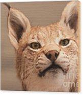 Lynx Portrait Wood Print