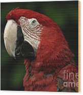 Macaw In Red Wood Print
