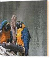 Maccaw Parrots Wood Print