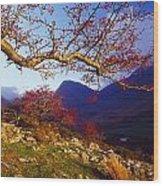 Macgillycuddys Reeks, County Kerry Wood Print