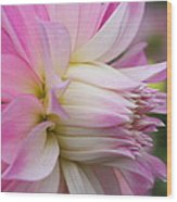 Macro Flower Profile Wood Print