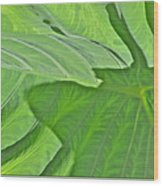Macro Leaf Structure Wood Print
