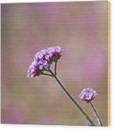 Macro Purple Flower Square Wood Print