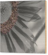 Macro Sunflower In Partial Color Wood Print