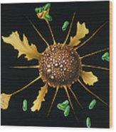 Macrophage Engulfs Bacteria Wood Print