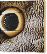 Macrophotograph Of Owl Butterfly Wing Wood Print