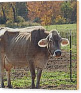 Mad Cow Tail Swish Wood Print