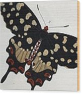 Madagascan Pipevine Swallowtail Butterfly Wood Print