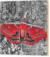 Madam Moth - Red White And Black Wood Print