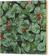 Madder Geophila Repens Fruiting Wood Print