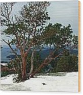 Madrone On Young Hill Wood Print