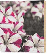 Magenta Flowers Wood Print