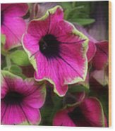 Magenta Petunia Wood Print