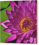 Magenta Waterlily Wood Print