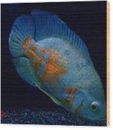 Magic Fish Name Oscar  Wood Print