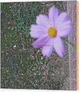 Magic Flower Wood Print