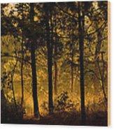 Magic Shadow Of Tree Wood Print