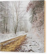 Magic Trail Wood Print by Debra and Dave Vanderlaan