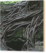 Magical Tree Roots Wood Print by Chris Hill