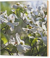 Magical White Flowering Dogwood Blossoms Wood Print