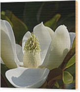 Magnificent Alabama Magnolia Blossom Wood Print