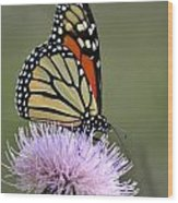 Magnificient Monarch Wood Print