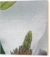Magnolia Exposed  Wood Print