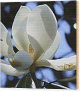 Magnolia In Blue Wood Print
