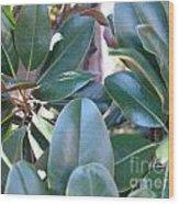 Magnolia Leaves 1 Wood Print