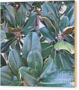 Magnolia Leaves 2 Wood Print