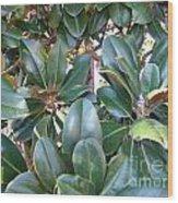 Magnolia Leaves 3 Wood Print