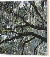 Magnolia Meets Live Oak Wood Print