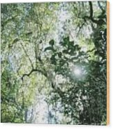 Magnolia Plantation Sc Wood Print