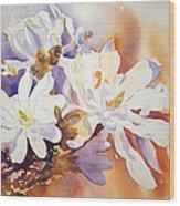 Magnolia Stellata Wood Print