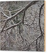 Magnolia Tree Branches Covered With Ice No.3834 Wood Print