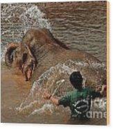 Bathing An Elephant Laos Wood Print