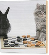 Maine Coon Kitten And Black Rabbit Wood Print