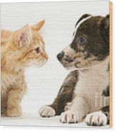 Maine Coon Kitten And Mongrel Dog Wood Print