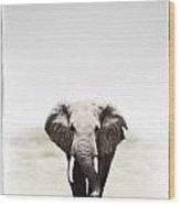 Majestic Elephant 2 Wood Print