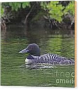 Majestic Loon Wood Print