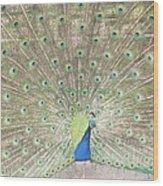 Majestic Peacock Wood Print