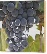 Malbec Grapes On The Vine Wood Print