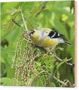 Male American Goldfinch 9245-i Wood Print
