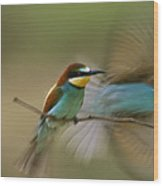 Male Bee Eater Leaves Perch To Find Wood Print