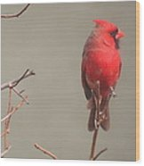 Male Cardinal On A Branch Wood Print