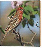 Male Finch Wood Print