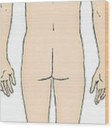 Male, Full Posterior View Wood Print