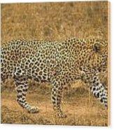 Male Leopard Wood Print