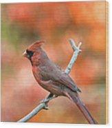 Male Northern Cardinal - D007810 Wood Print